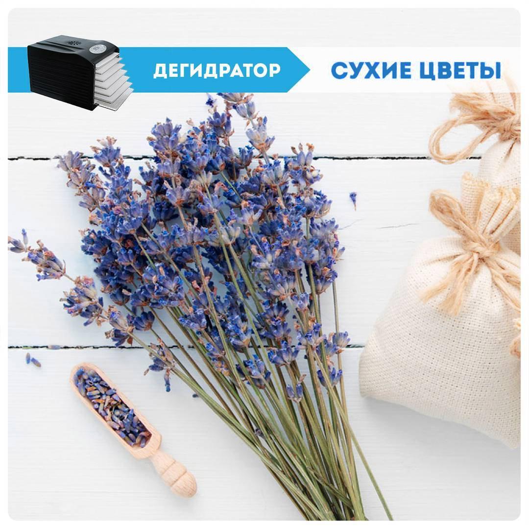 Сушка растений цветов дегидратор Dream Vitamin купить сушилку